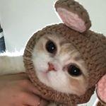 https://www.instagram.com/dear.mycats