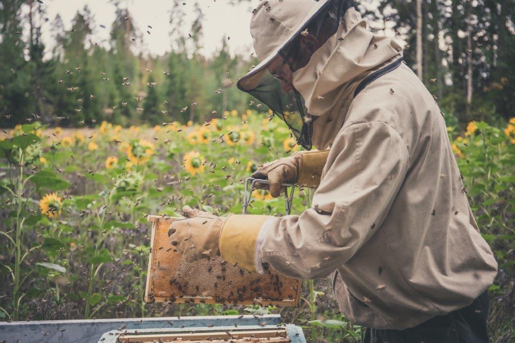 Beekeeper tending to hive