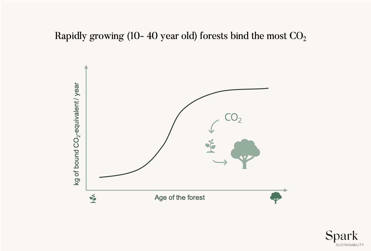 Graph of how many kg of CO2 equivalents forest bind at different ages – basically the older the forest the more it binds.