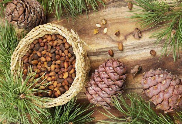 Tác dụng hạt thông làm ức chế thèm ăn