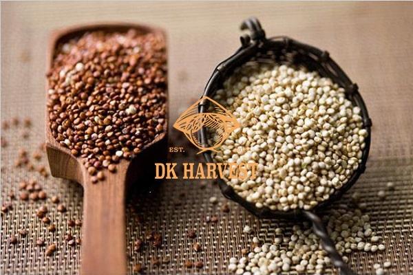 Mua hạt diêm mạch Quinoa ở đâu tốt nhất