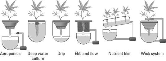 cannabis-hydroponic-system