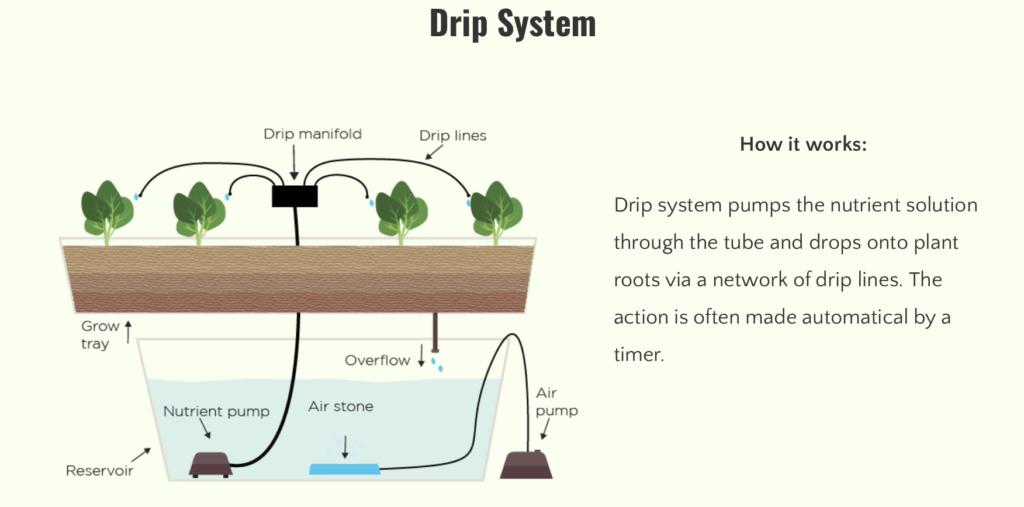 Drip-system-cannabis-harvest