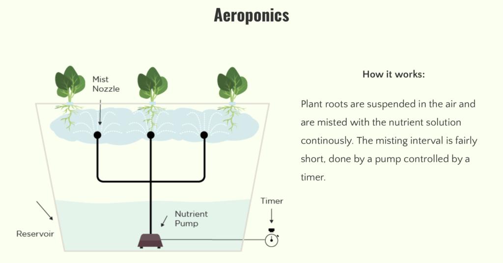 Aeroponics_Gardening-cannabis-harvest