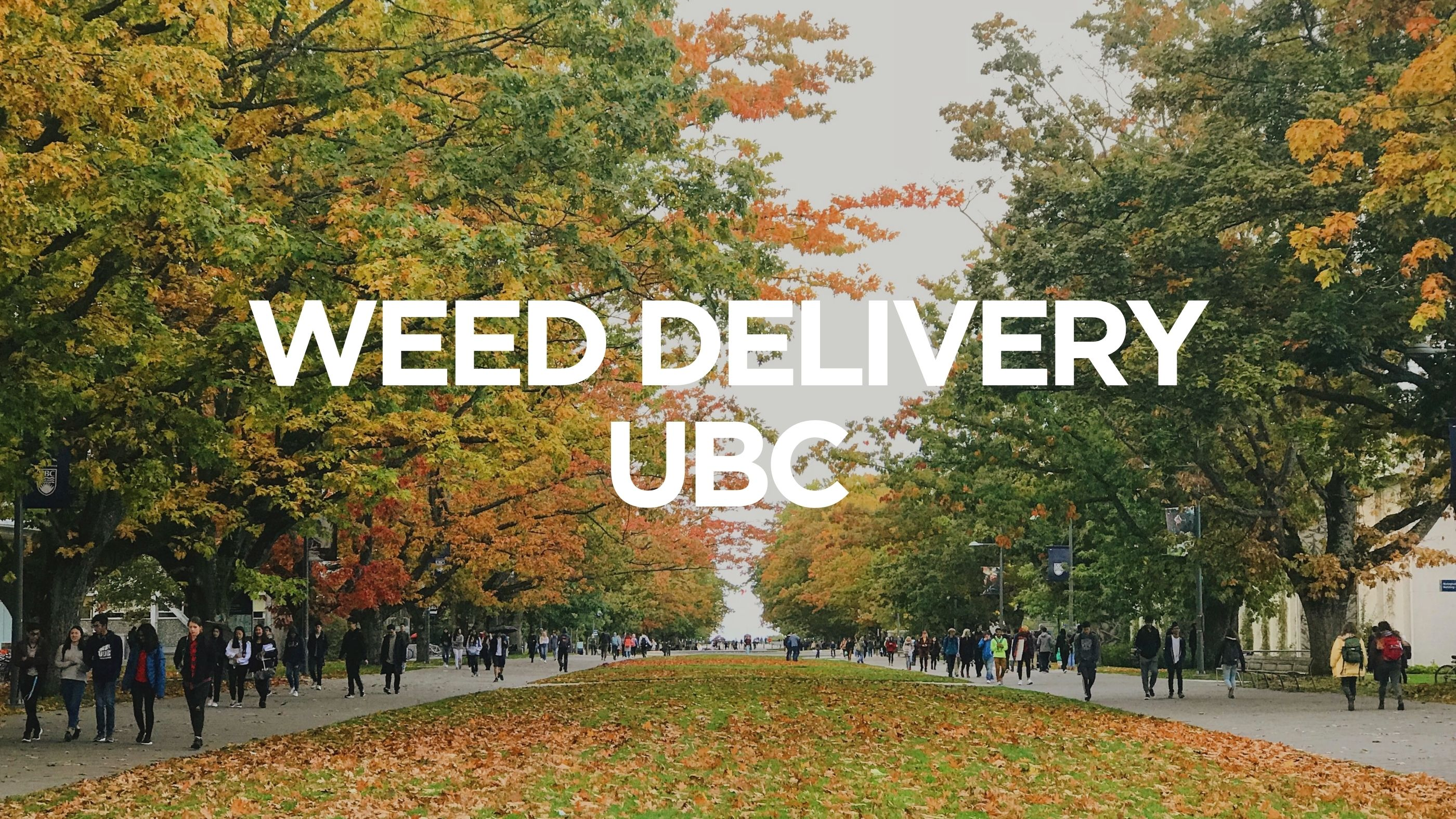 Weed Delivery UBC