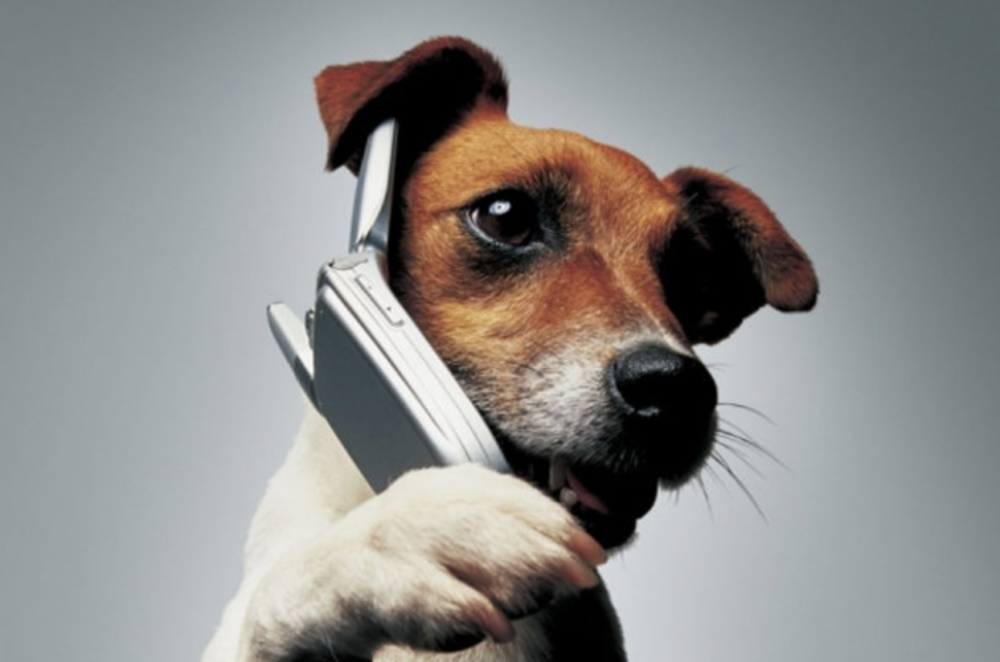 Dog on mobile phone