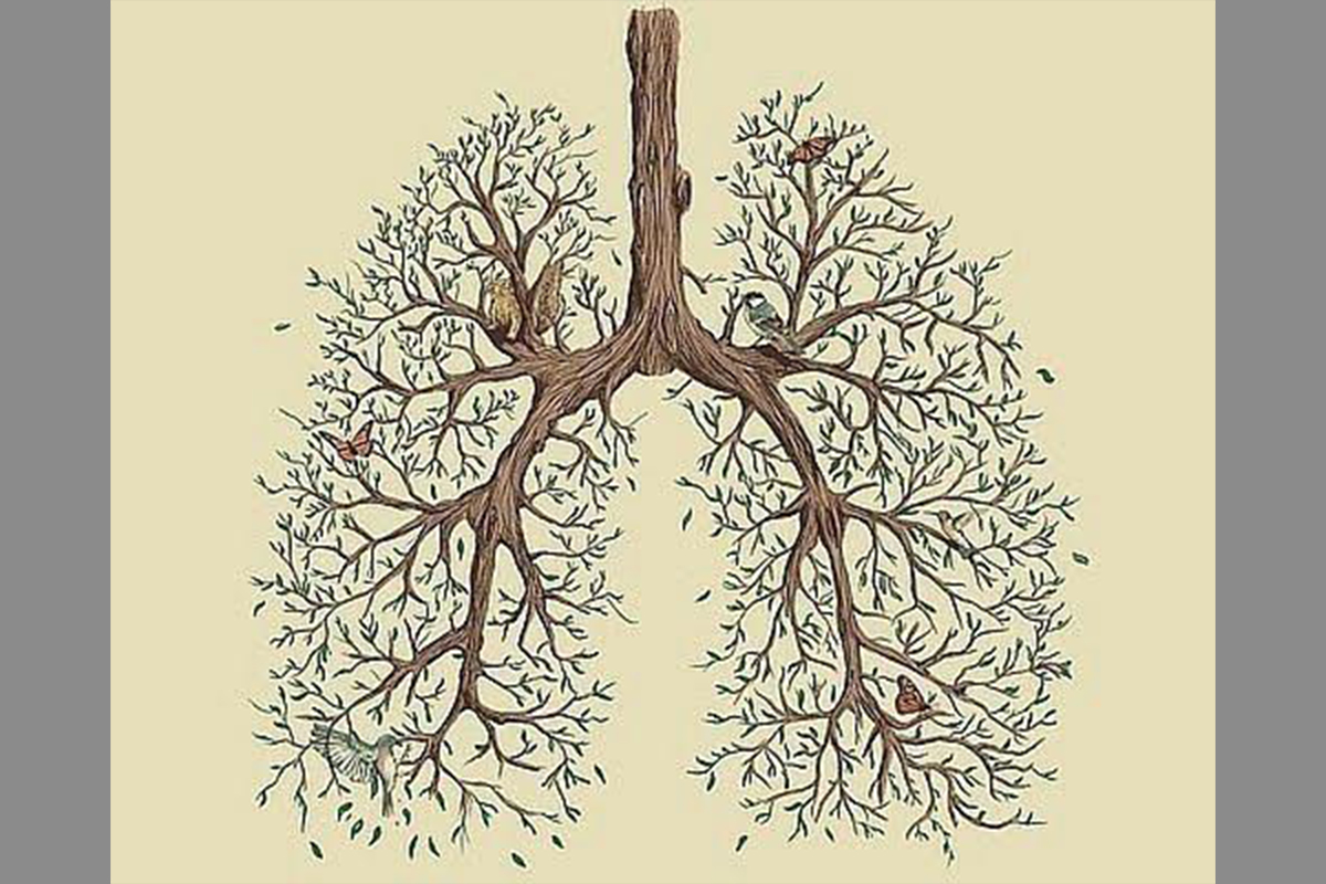 Lungs made out of tree branches