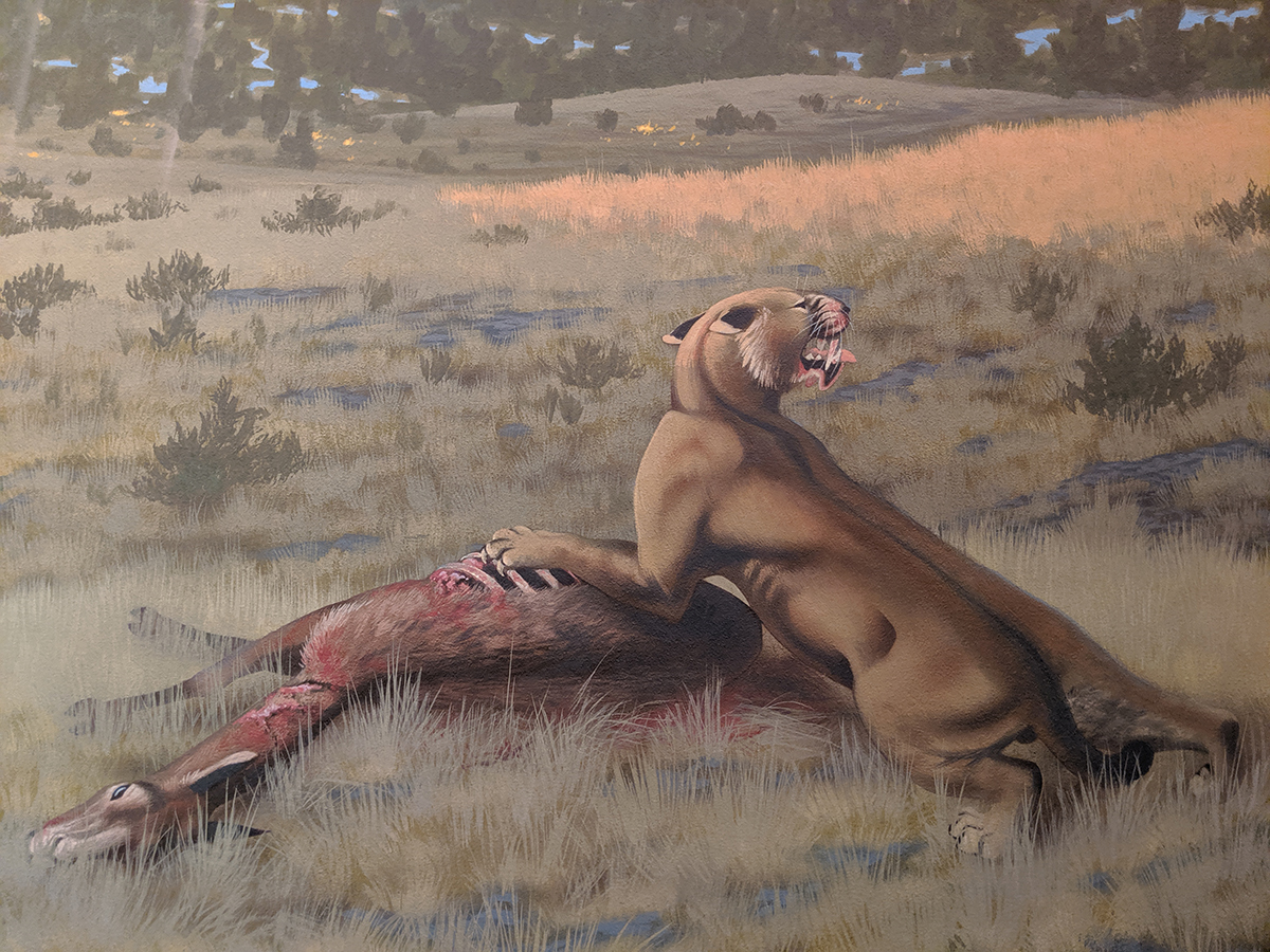 An artist's depiction of the Machairodus lahayishupup eating Hemiauchenia, a camel relative.