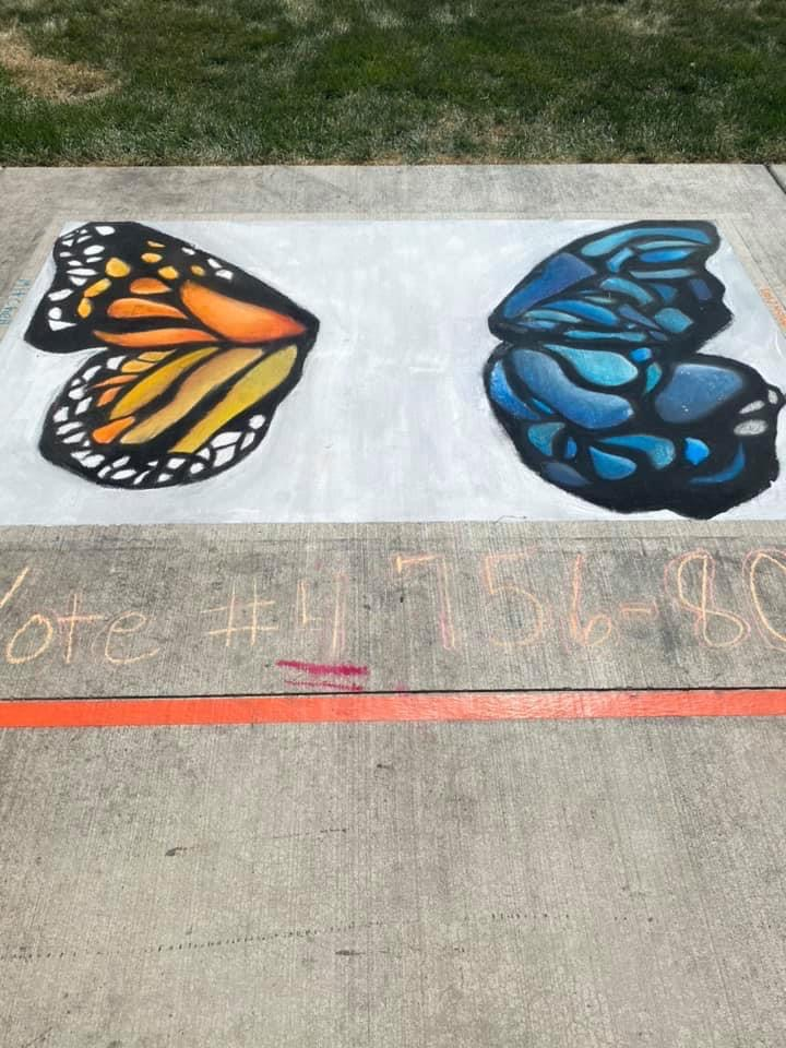 2 types of butterfly wings