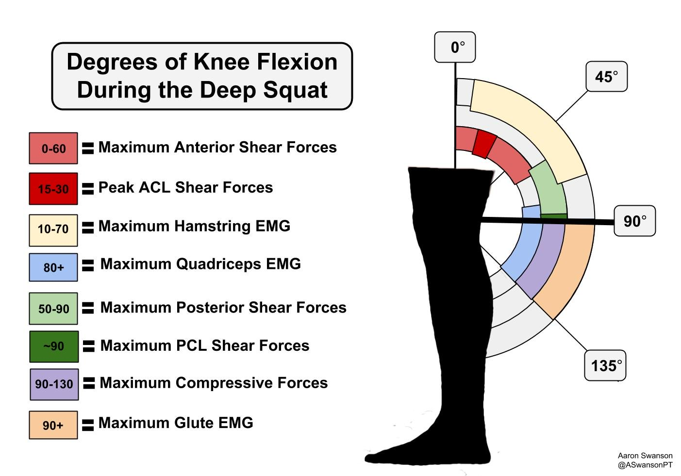 Forces-with-the-Deep-Squat