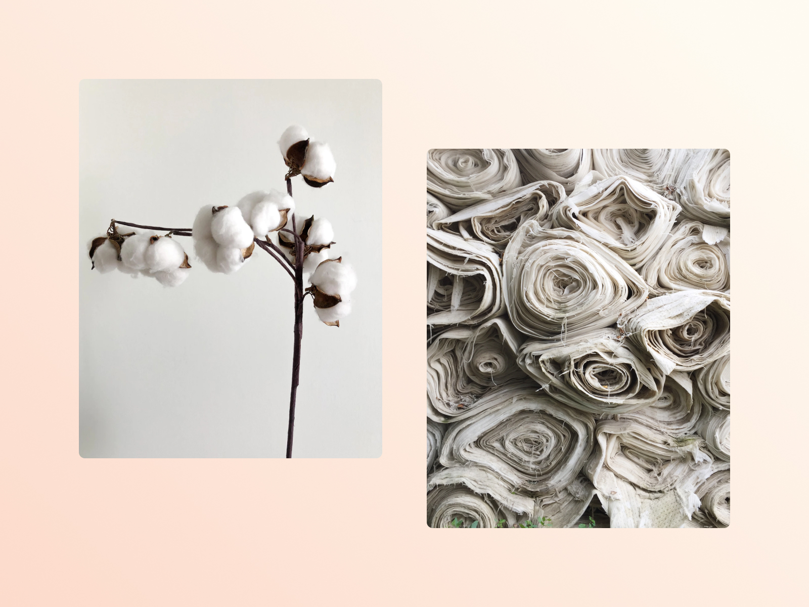 Material: A definitive guide to organic Cotton