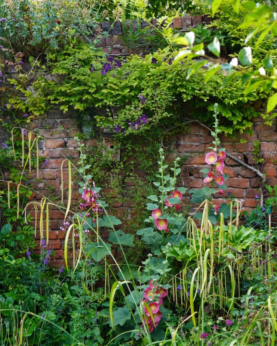 My Garden...