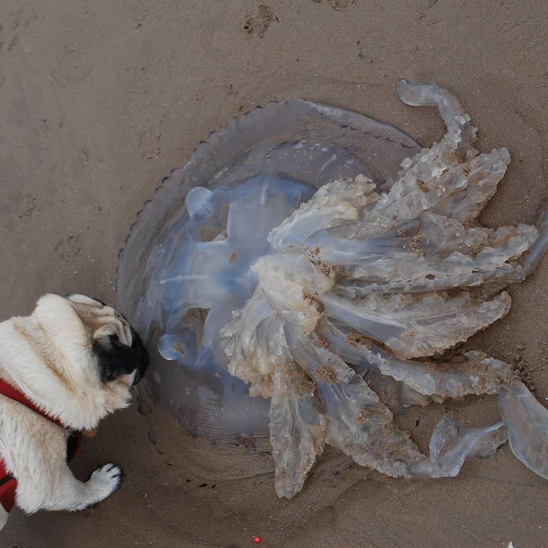 Awesome Jellyfish