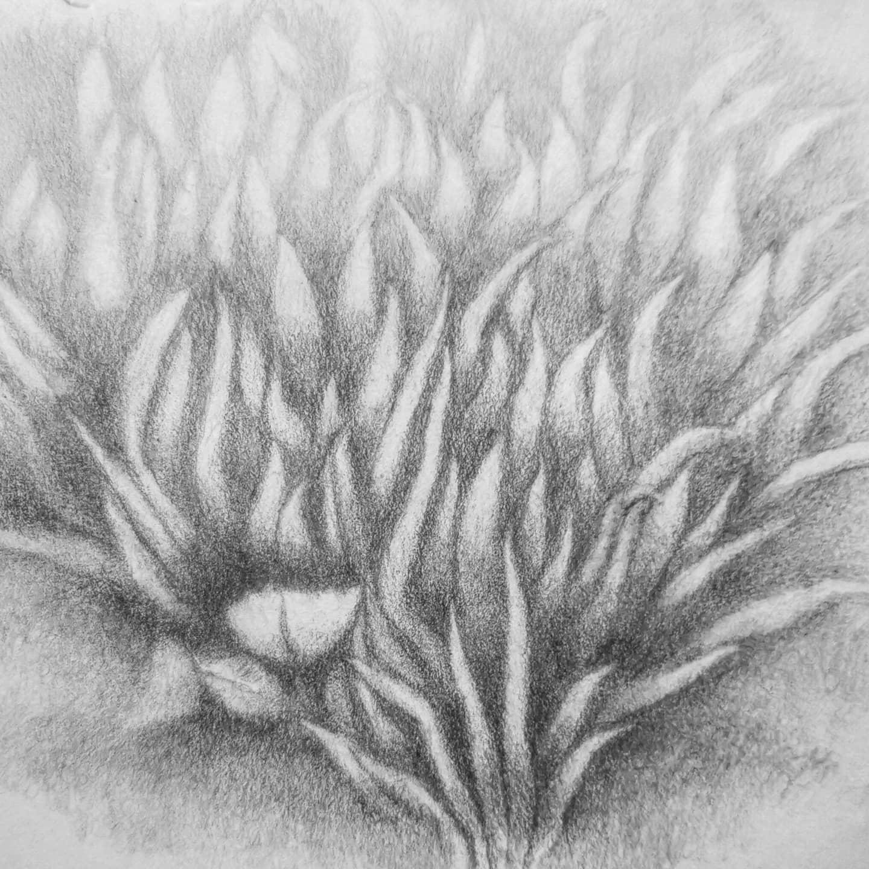 Waterlilies Chloe Augusta 2021  @edinburghbotanicgardens #edinburghbotanicalgardens