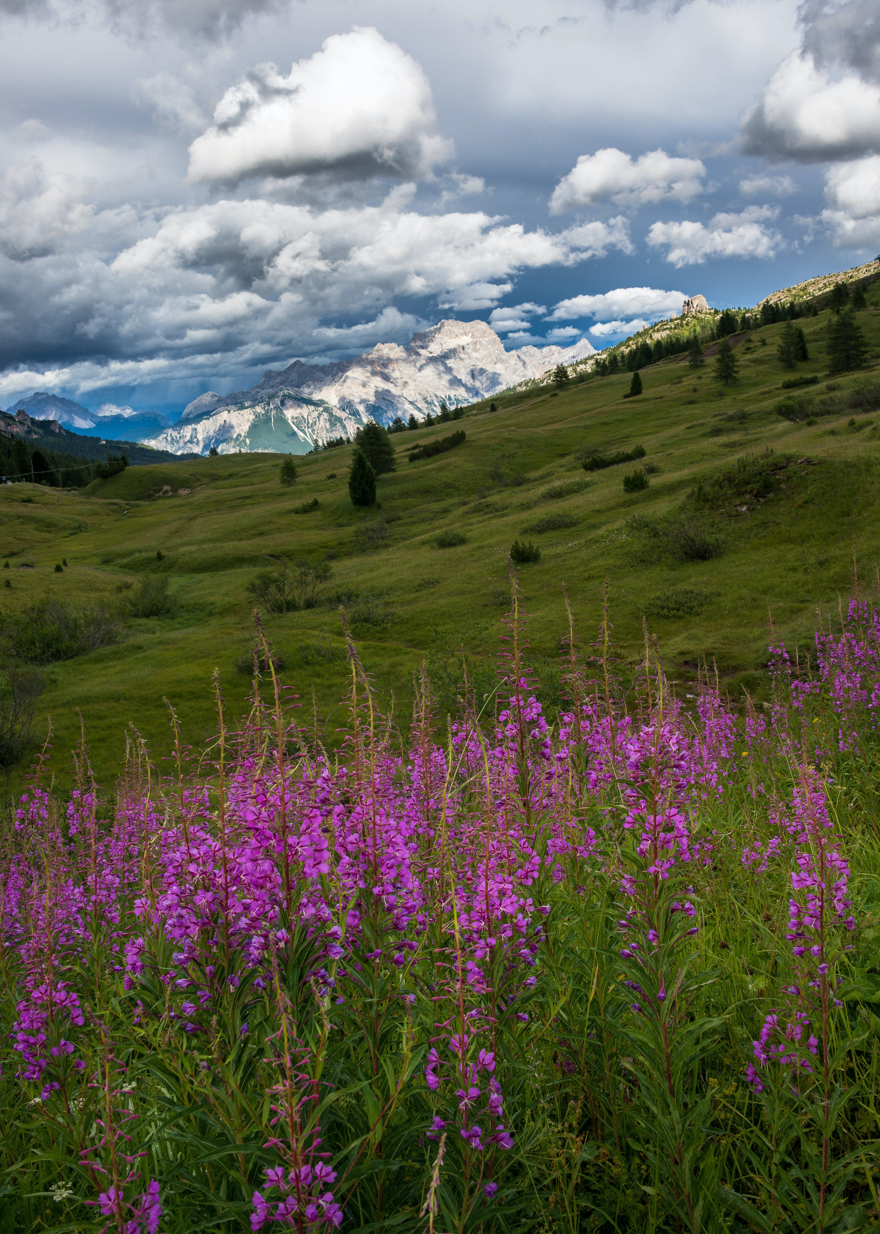Landscape photograph of mountain and purple flowers