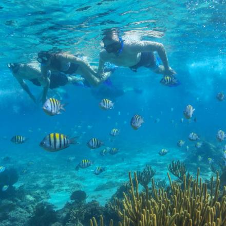 Snorkel in crystal waters