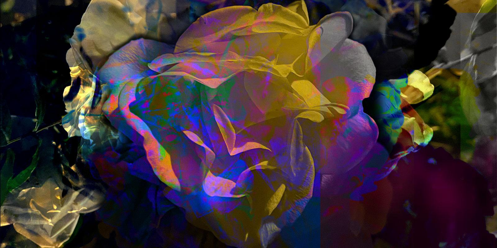Flowers for AVS • 300 x 150 cm (118.11 x 59.06 in)