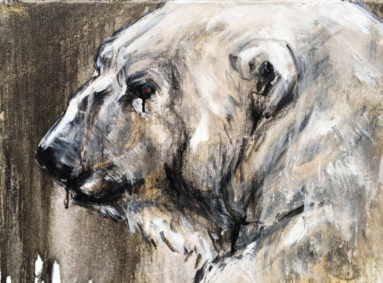 Polar Bear 16