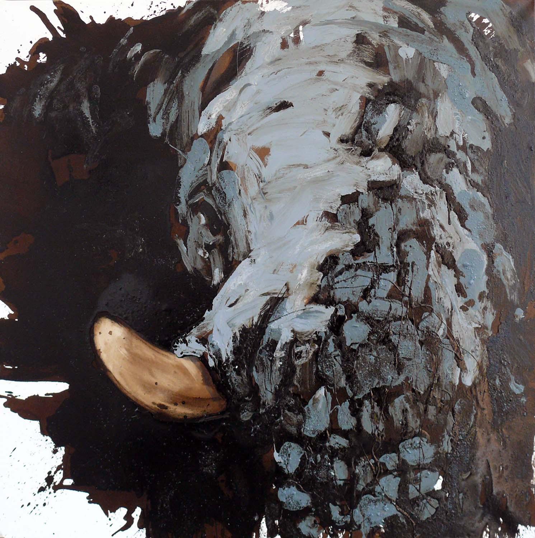 Elefant 62