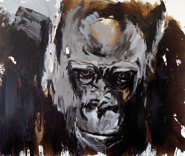 Gorilla 26