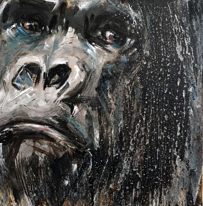 Gorilla 66