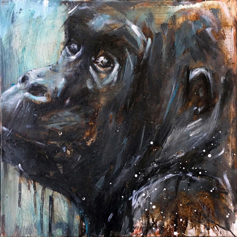 Gorilla 81