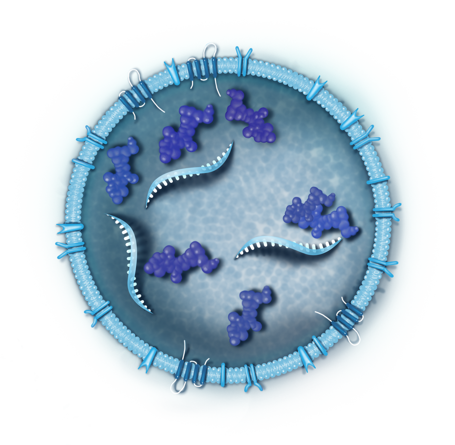 Generic exosome illustration