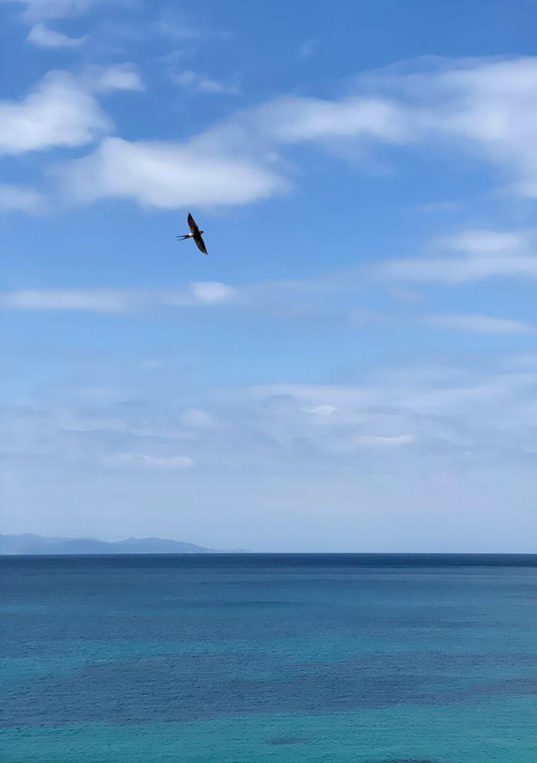 View of sea horizon and bird flying