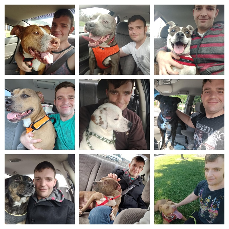 Collage of Daniel Wallen posing with nine of his favorite pit bulls. They come in all colors: white, brown, grey, black, and spotted