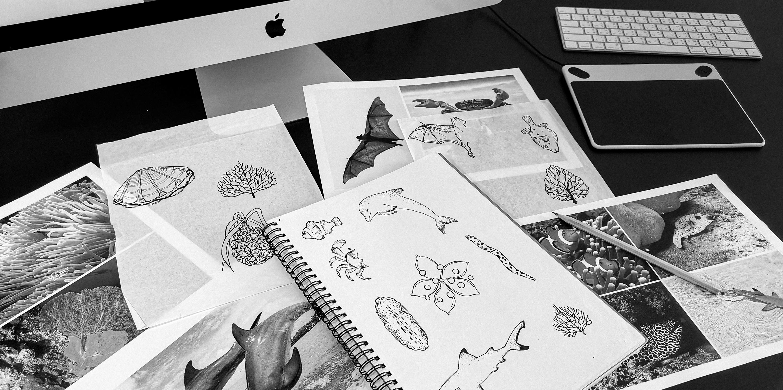 Sketch | Maiton | Simplisis Design Studio | Branding Design Agency in Phuket | Corporate Identity Design