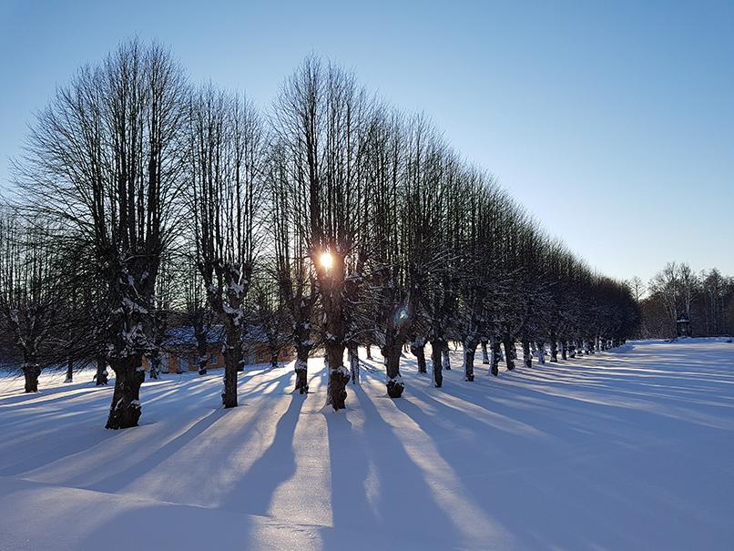 Inventering av träd