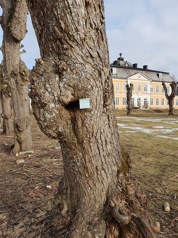 Trädvårdsplan