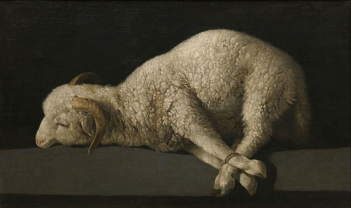 agneau pattes liées cornes blanc
