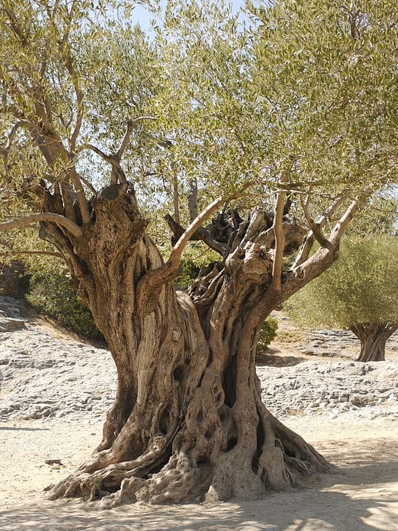 tronc d'arbre feuilles ciel