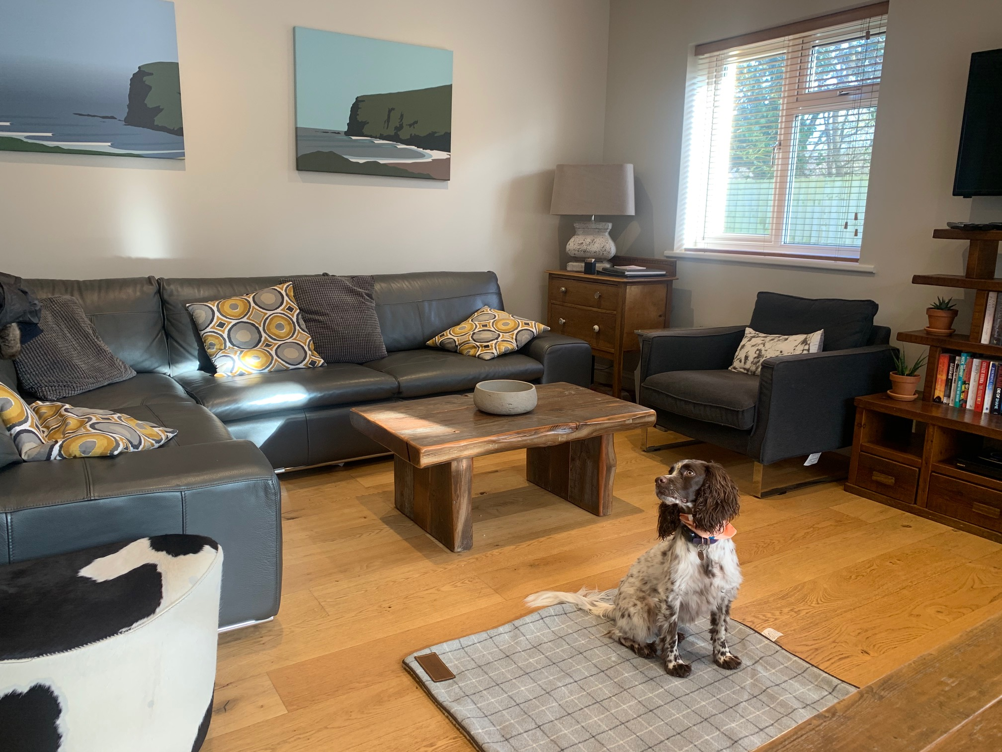 Maisie the Spaniel makes herself at home at award-winning Gwelmor holiday cottage in Widemouth Bay, north Cornwall