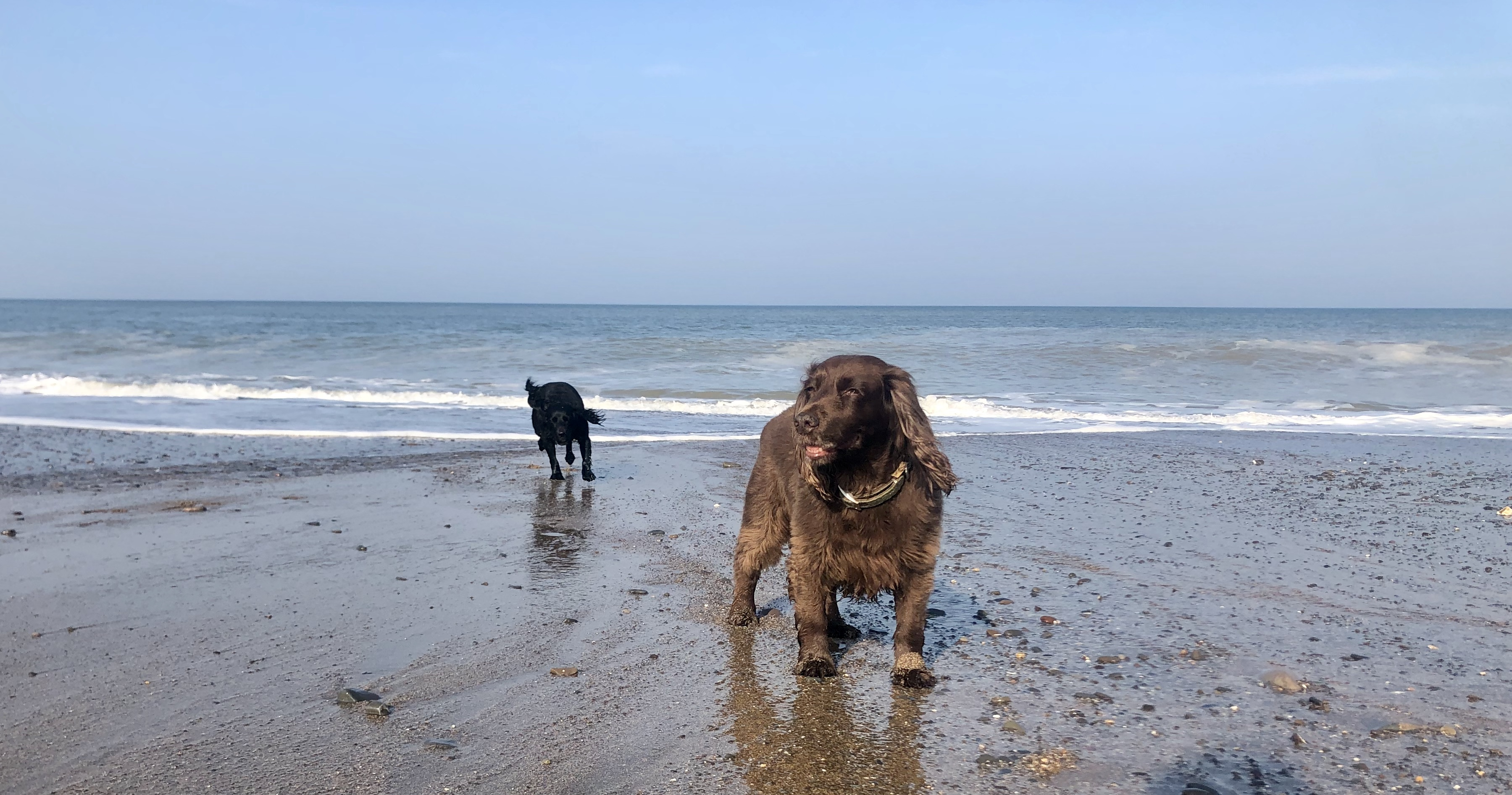 Best dog-friendly beaches near Gwelmor