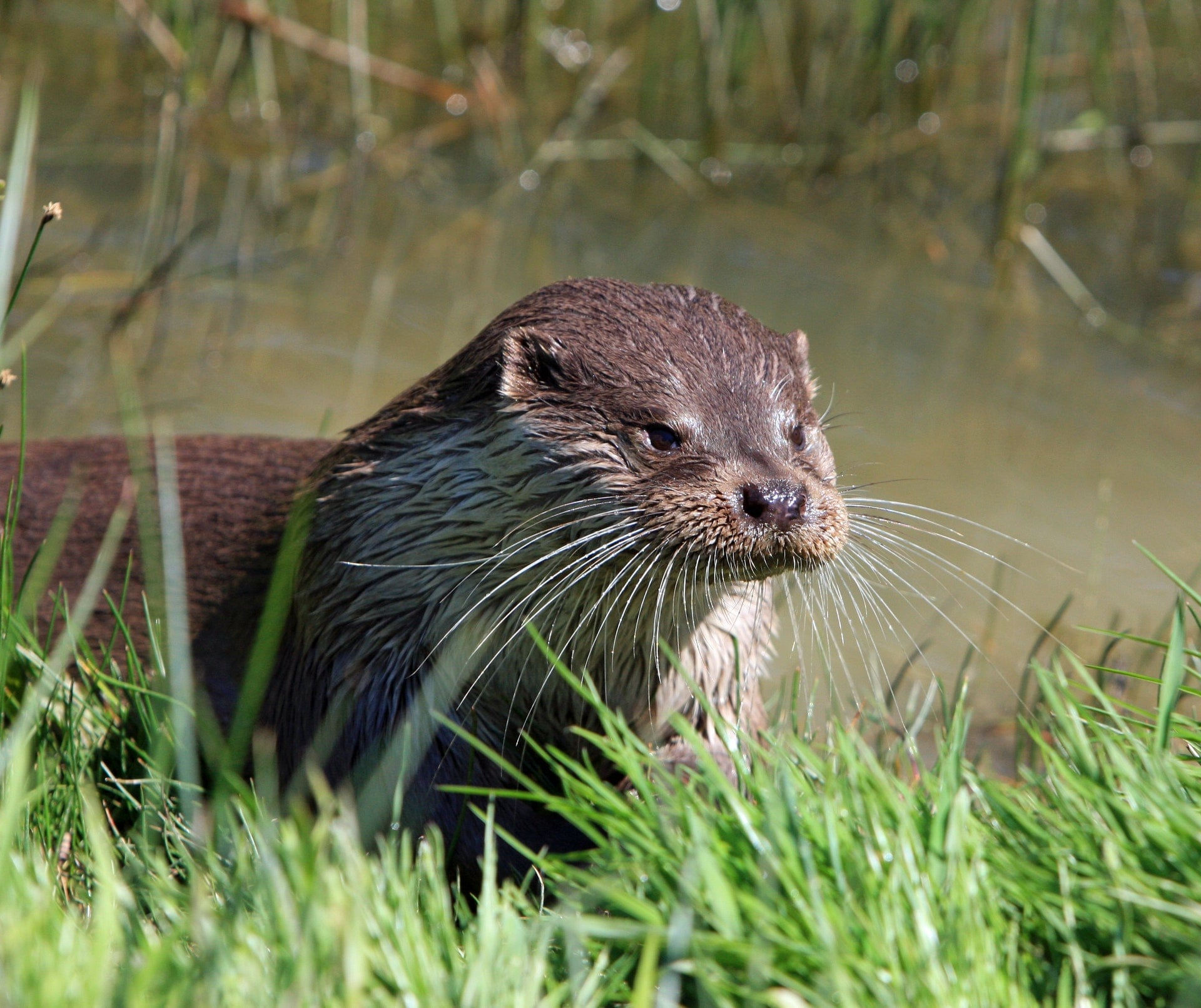 Tamar Otter and Wildlife Centre
