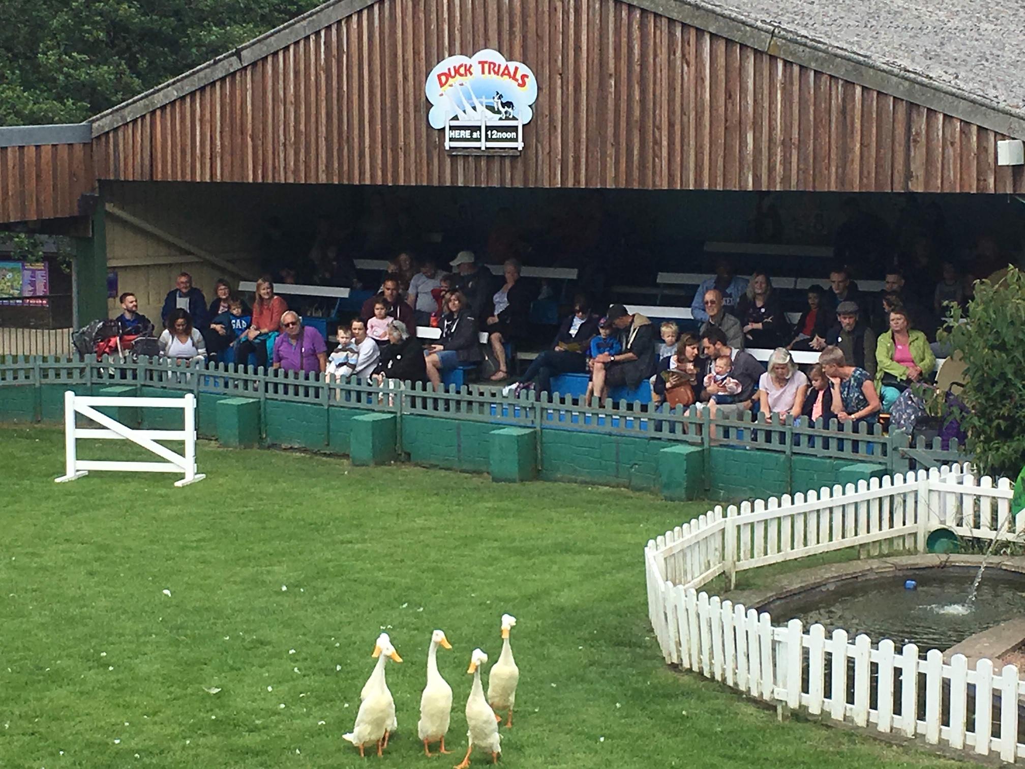 The Big Sheep in Bideford Devon