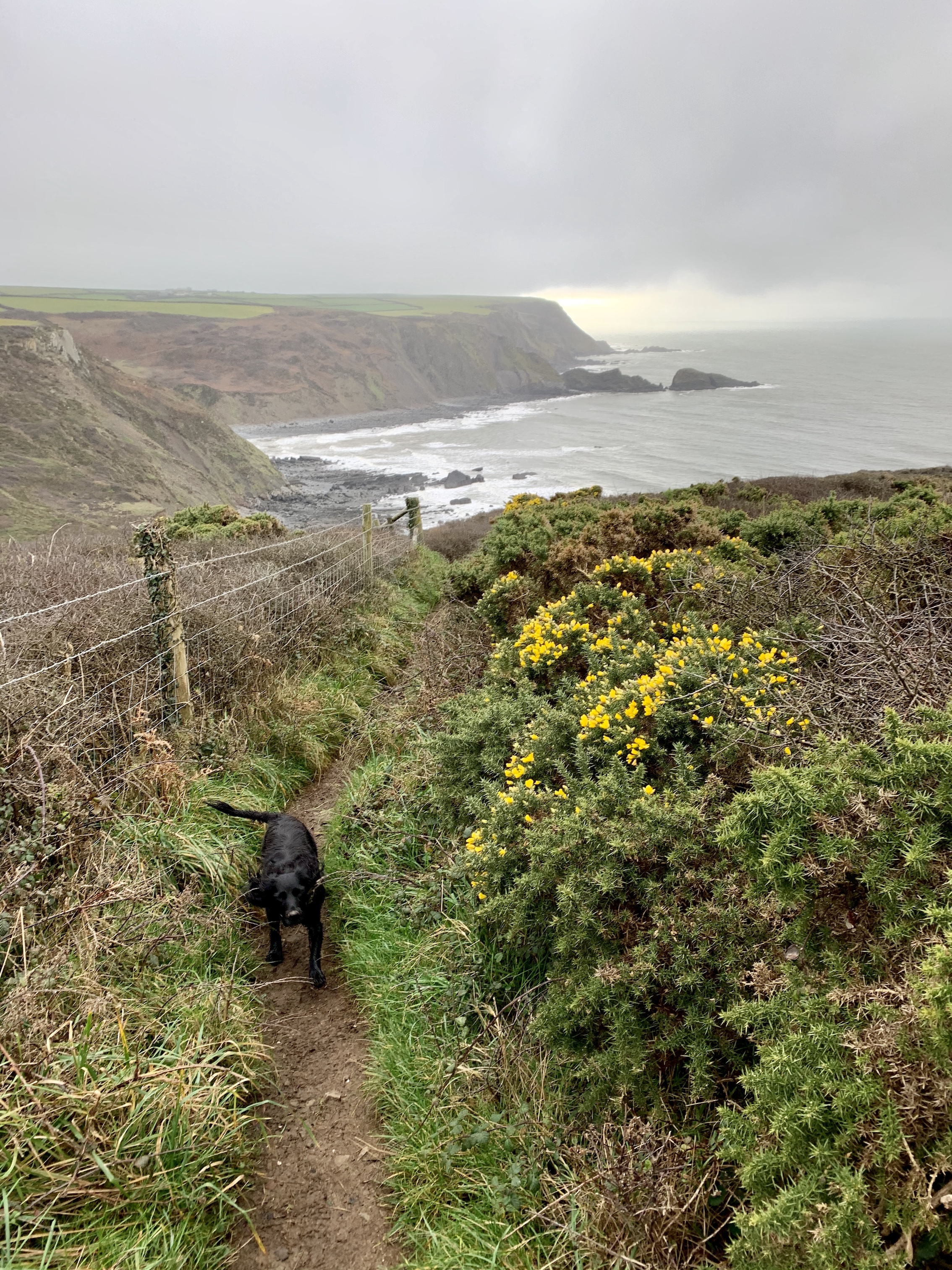 The South West Coast Path from Hartland Quay to Morwenstow