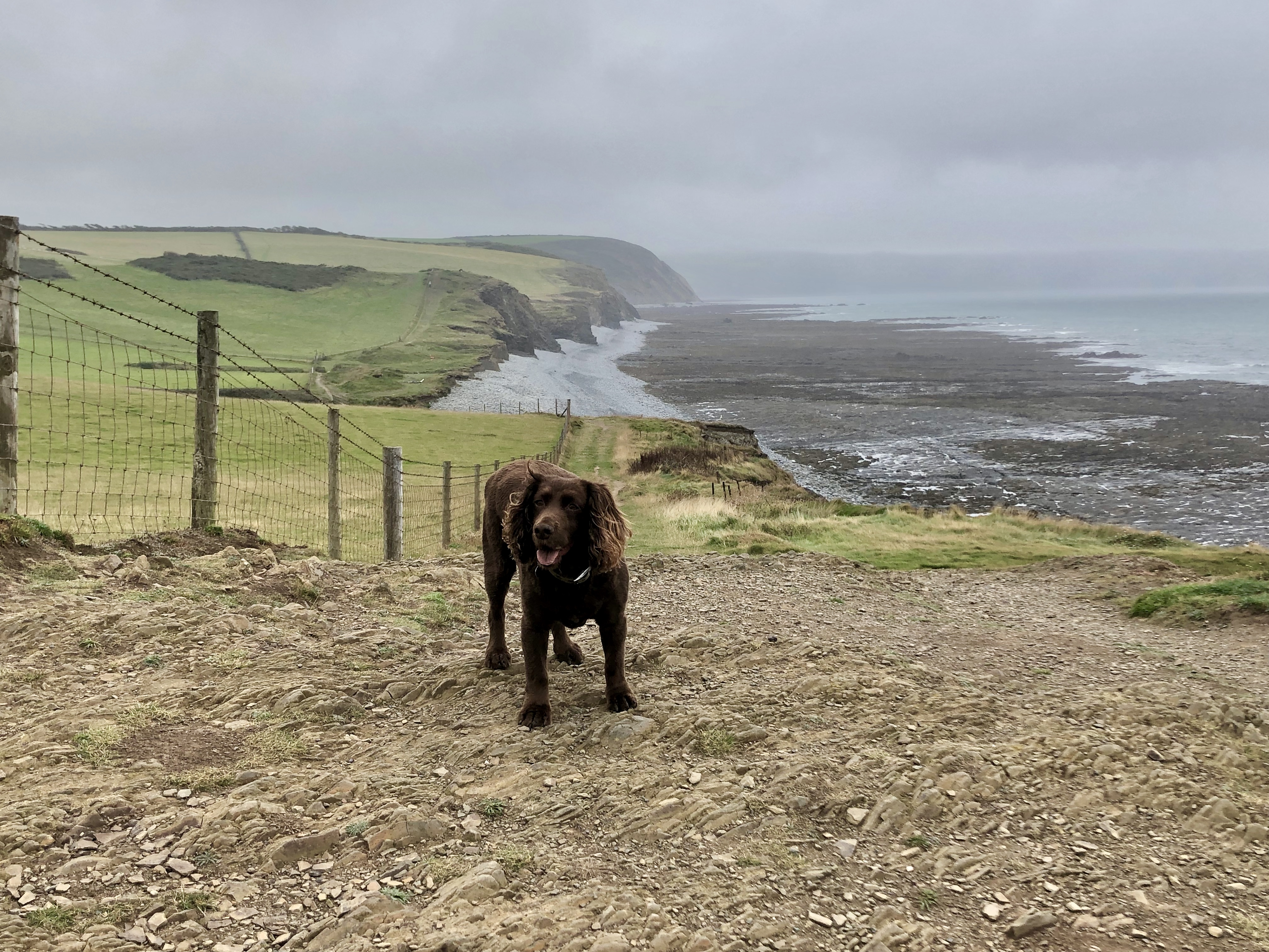Walking the stunning South West Coast Path along the cliff top after leaving Westward Ho!