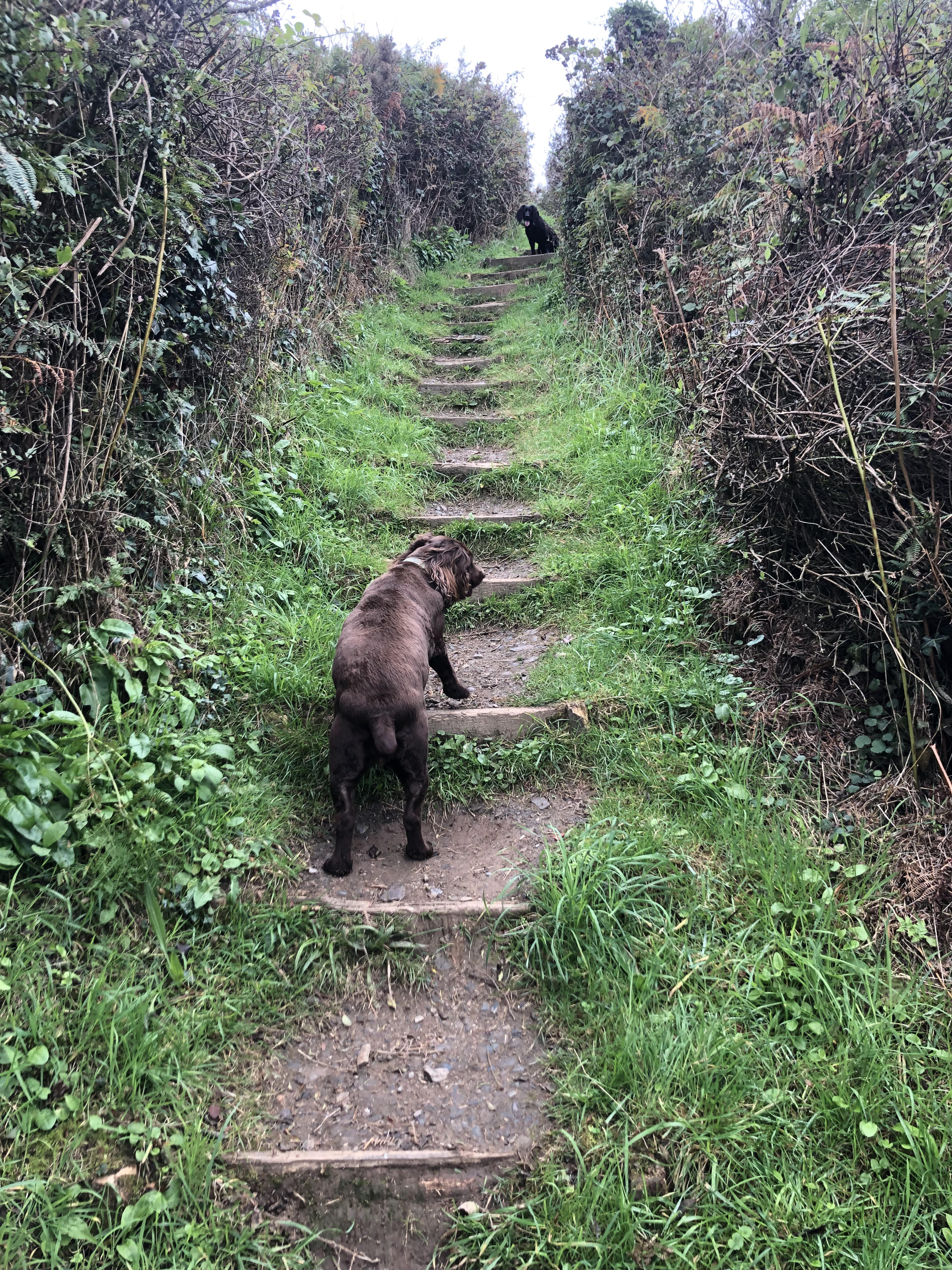 Molly and Indy on one of the many steep climbs along the South West Coast Path