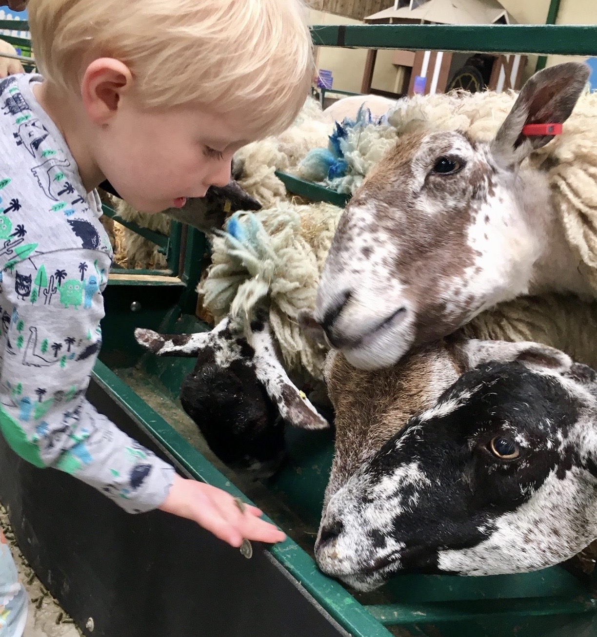 Fun feeding the animals at The Big Sheep in Cornwall