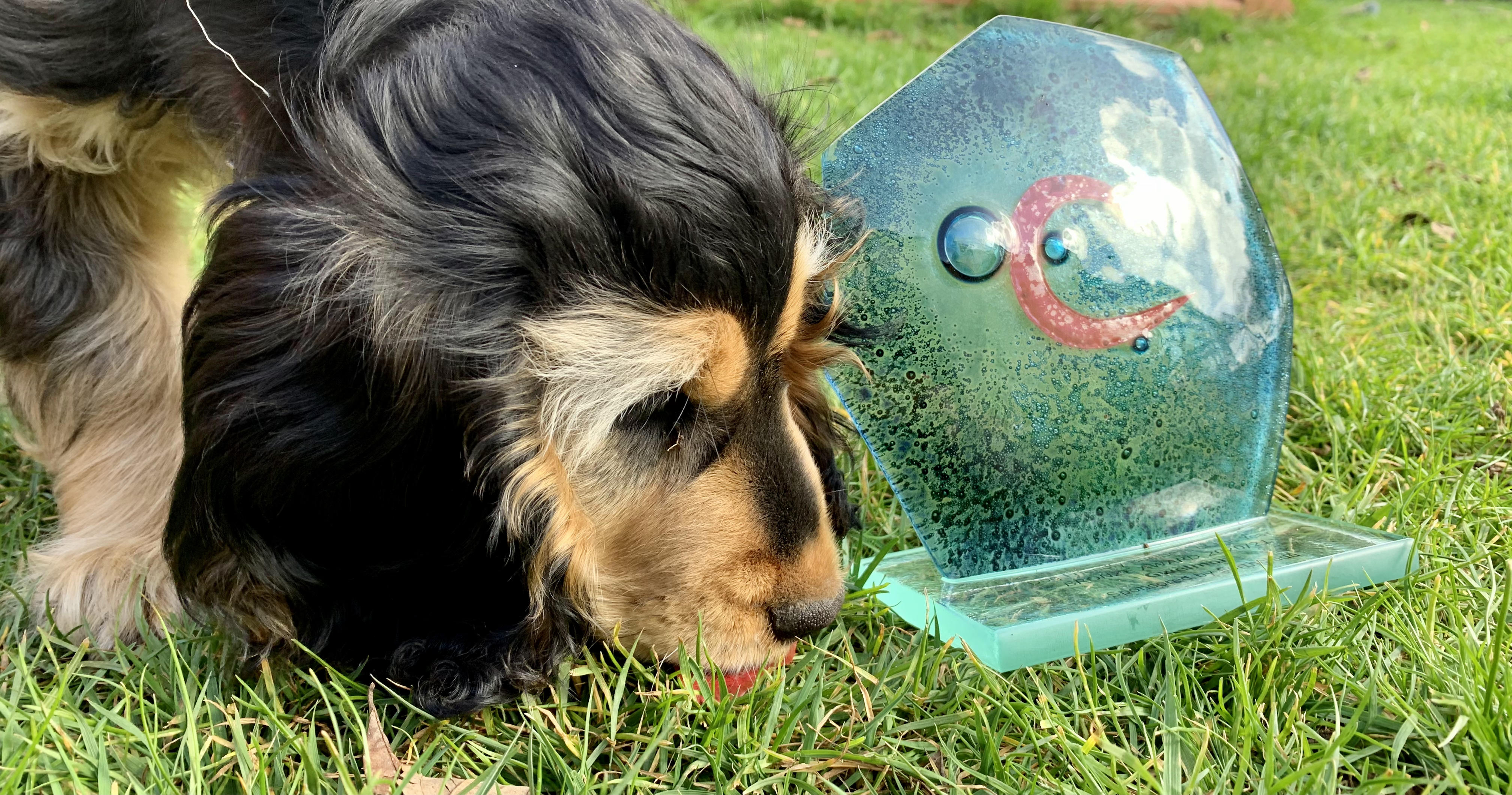 Margo shows off Gwelmor's Bronze award for 'Dog Friendly Business of the Year' in the Cornwall Tourism Awards 2020/21