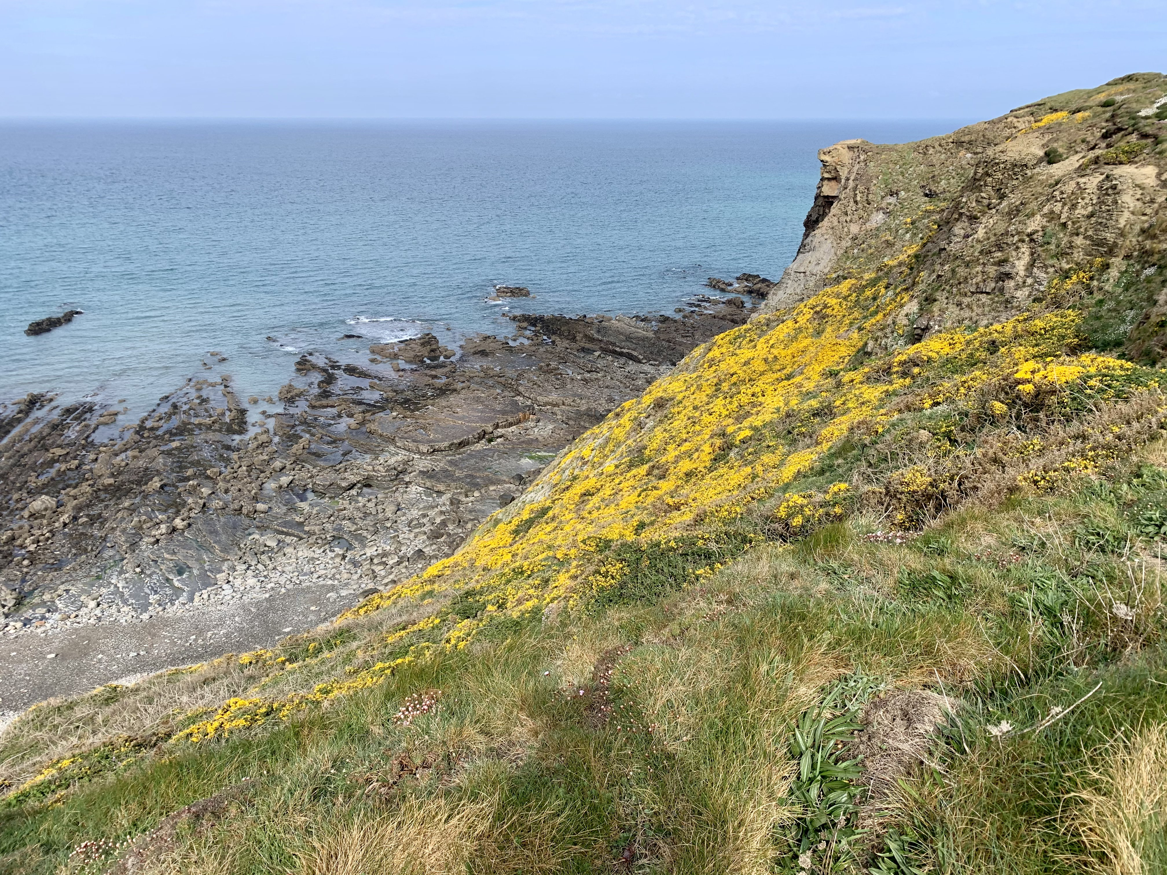 Colourful cliff side on the South West Coast Path out of Widemouth Bay
