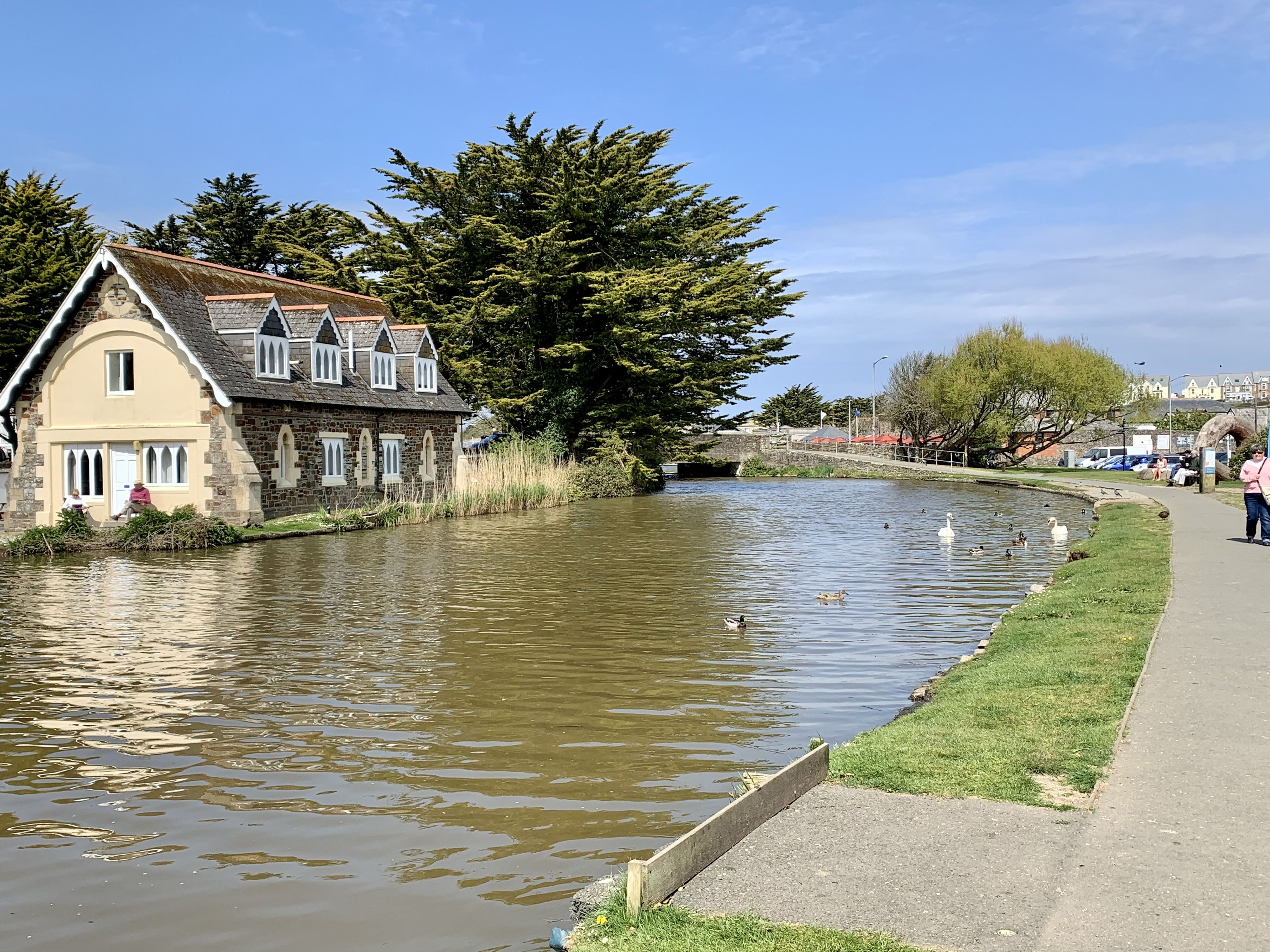 Bude Canal with it's abundance of wildlife including geese, swans and ducks