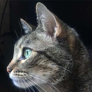 vogue cat