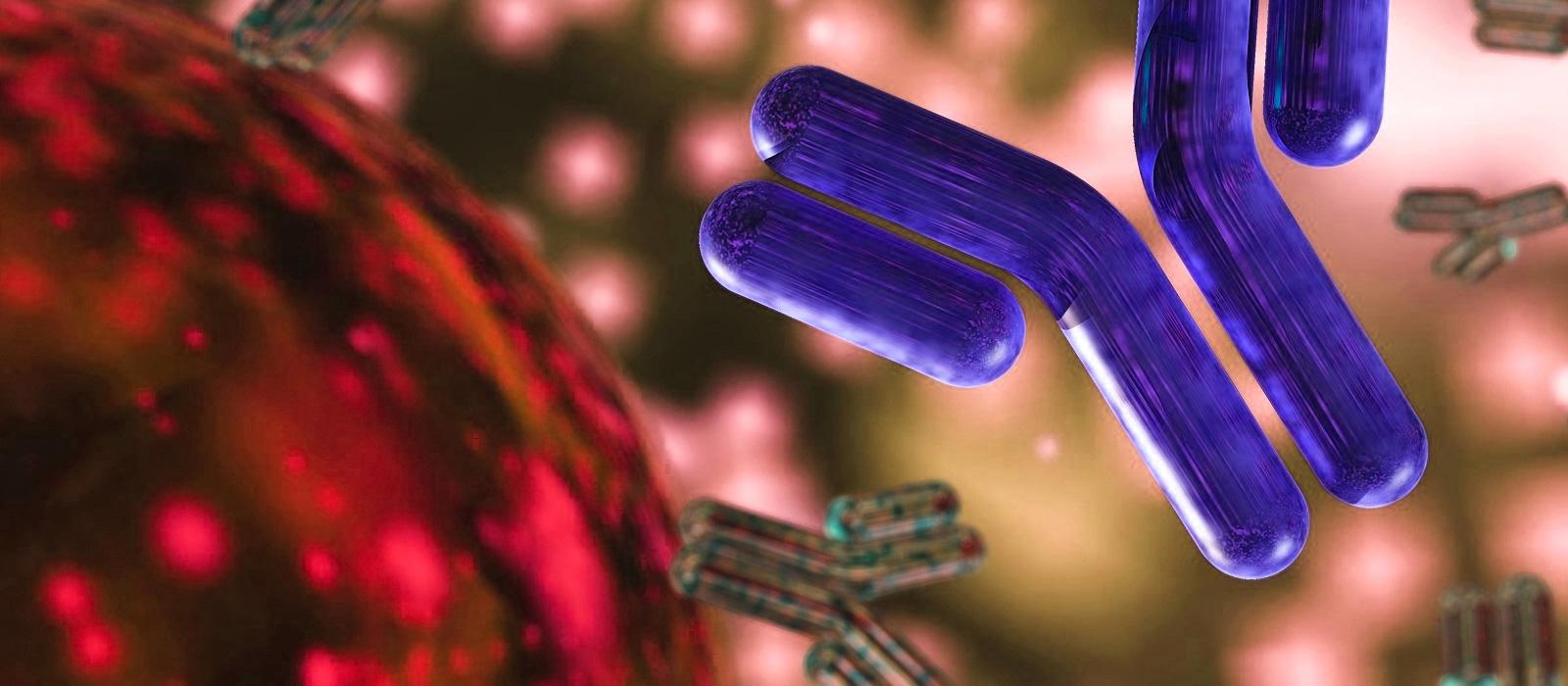 Linh chi và hệ miễn dịch trong cơ thể