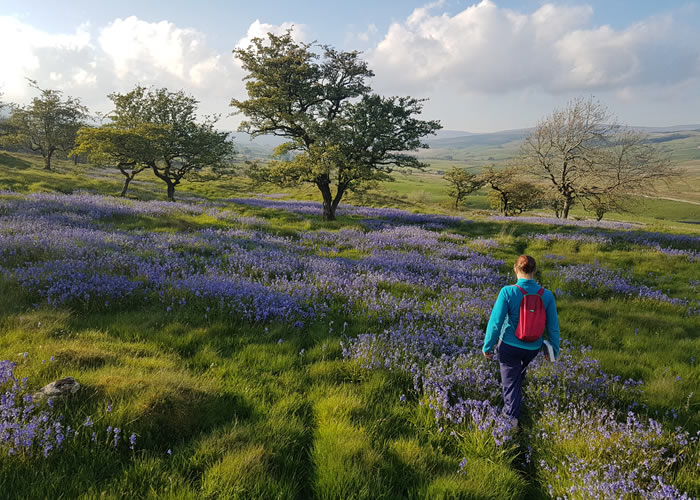 Wildflowers of the Yorkshire Dales