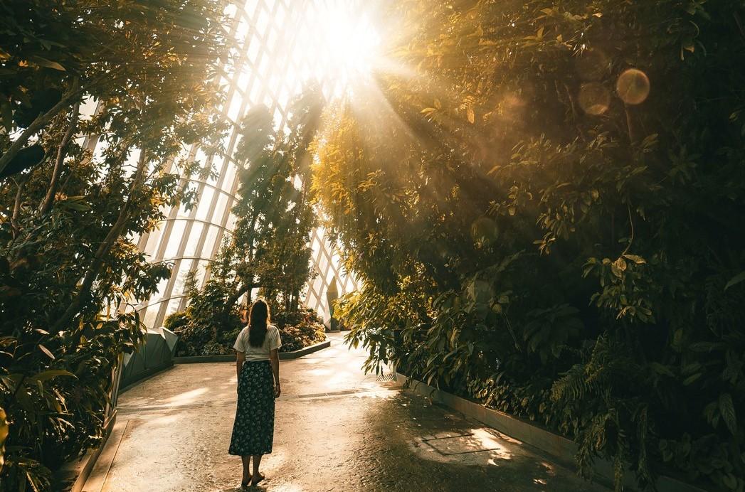 Light breaking through in Singapore Garden