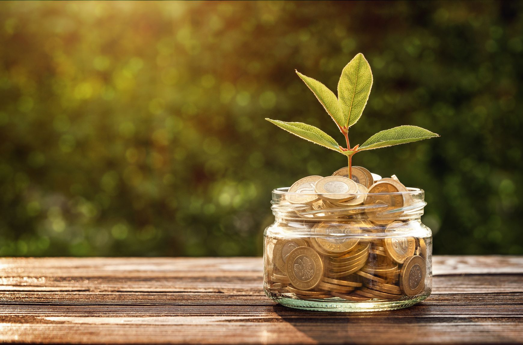 Revenue Forecasting - Is it relevant in a Pandemic? plant in money jar